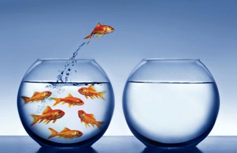 independent_goldfish